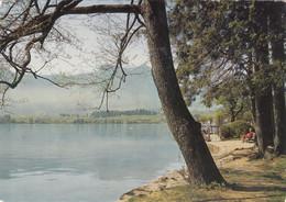 503) Alpenseebad MONDSEE - Blick Von Strandpromenade Auf Drachenwand 1976 - Mondsee