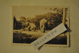 Photo Photographie Jardin D'acclimatation Paris Les Elephants - Lieux
