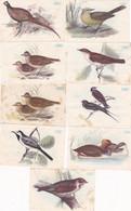 Chromo - Image : 9 Images : Chocolat MAGNIEZ BAUSSART : Oiseaux : N° 1 - 5 - 6 - 24 - 24 - 29 - 22 - 60 - 77 : - Zonder Classificatie