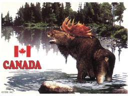 (X 26) Canada - Bull Moose - Other
