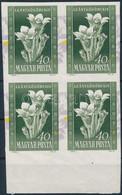 ** 1950 Virág I. 40f Vágott ívszéli Négyestömb, Elcsúszott Lila Színnyomattal - Non Classificati