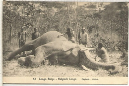 CONGO BELGA ENTERO POSTAL ELEFANTE ELEPHANT MAMIFERO - Olifanten