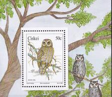 UMM, Owls M/S, 1991 - Ciskei