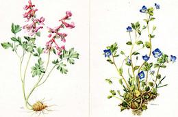 LOT DE 2 CARTES - Plantes, Fleurs - Véronique - Corydale - B. Plantas De Flores & Flores
