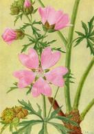 FLEURS DES CHAMPS ET DES PRAIRIES - 15 PLANCHES - CHROMOS - B. Plantas De Flores & Flores