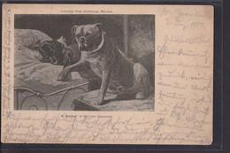 B37 /   Dackel  In ärztlicher Behandlung / 1901 - Cani