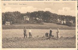 Saint-Sauveur Chalet Baurain  Récolte De Pommes De Terre - Frasnes-lez-Anvaing