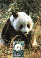 Carte Maximum YT 4372 Panda Géant 1er Jour 20 06 2009 TBE Paris (75) Animaux Disparus Ou Menacés - 2000-09