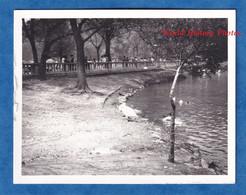 Photo Ancienne Snapshot - MEXICO CITY Ou Environs - Jardin à Situer - étang ? - Vers 1967 - Histoire Mexique Garden - Auto's