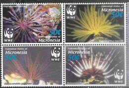 Micronesia   2005  Sc#659   WWF Marine Life Block  MNH  2016 Scott Value $4 - Micronesia