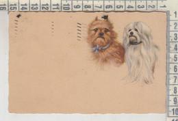 CANI DOG CHIEN  CANE 1925 - Hunde