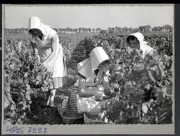 Bourgogne ( 21 ), Photo Collée Sur Carton De Présentation D'editeur De Cartes Postales. Vendanges, Vin, N° De Reference - Bourgogne