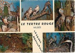 CPSM - Parc Zoologique De La FLECHE - Tertre Rouge - Lot De 3 Cartes - Edition Adia - A SAISIR - Other