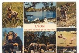 CPM - LYON - Parc ZOO De La Tête D'or - Différentes Vues - Lot De 5 Cartes - A SAISIR - Other