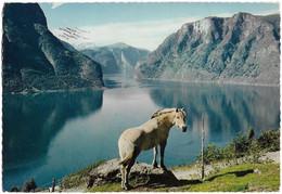 Cheval En Norvège (carte Circulée) - Cavalli