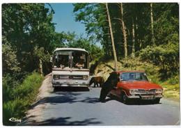 Autos Voitures Automobiles Cars - Parc De PEAUGRES - Renault 16 R16 - Bus Car Autocar Mercedes - Turismo