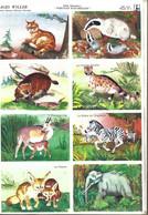 Les Belles Images Willeb / Les Mamifères Sauvages - Réf. 1370 - Pl. N° 2 - Animaux