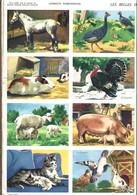 Les Belles Images Willeb / Animaux Domestiques - Réf. 1370 - Pl. N° 11 - Animaux