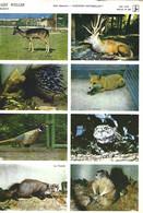 Les Belles Images Willeb / Les Animaux D'Europe - Réf. 1370 - Pl. N° 460 - Animaux