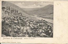 001732 - TURKEY - SOUVENIR DE TREBIZONDE - PASTEURS ET MOUTONS - ED. NOURI - 1900s - Turchia