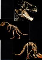 3 Cartes - Dinosaures - Non Classificati