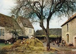 Cour De Ferme (carte Vierge) - Farms