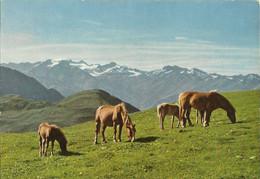 2 AKs Pferde Haflinger Südtirol + Schimmel #Lot - Cavalli
