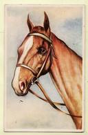 Ani081 CHEVAL Horse Cavalli Caballo Pferde Paard CPSM 1940s - N°7354 - Cavalli