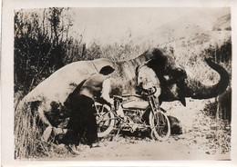 Belle Photo Originale 13x18 L'emploi De La Motocyclette Pour La Chasse A L'éléphant Sauvage A VOIR Texte Au Dos - Coches