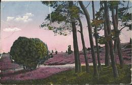 "6 171 Ak Blühende Heide Bahnpost ""SCHWARZENBEK(HOLST)-OLDESLOE"" 1921 - Usados"