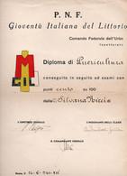 P.N.F. GIOVENTU' ITALIANA DEL LITTORIO - DIPLOMA DI PUERICULTURA 1941 - Diplome Und Schulzeugnisse