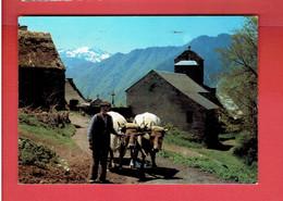 LUCHON 1983 ATTELAGE DE BOEUFS A ARTIGUE CARTE EN BON ETAT - Luchon