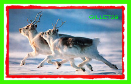 PEARY CARIBOU ON CANADA'S ELLESMERE ISLAND - NATIONAL GEOGRAPHIC SOCIETY IN 1988 - - Andere