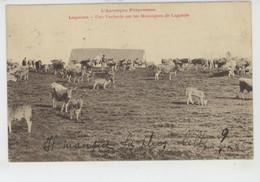 LAGUIOLE - Une Vacherie Sur Les Montagnes De LAGUIOLE - Laguiole