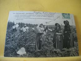 17 5008 CPA 1907 - 17 ILE D'OLERON. TYPES DU PAYS. RECOLTE DES ARTICHAUTS - ANIMATION - Ile D'Oléron
