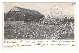 SACRAMENTO - A Pigeon Farm - 1904 - - Otros