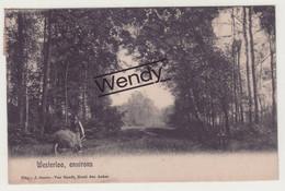 Westerloo (environs) - Westerlo