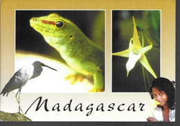 Madagascar - Madagascar