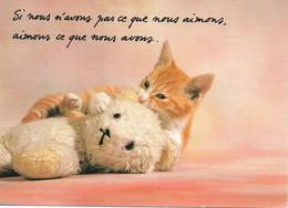 """L54B070 - Chat Avec Un Nounours - """"Si Nous N'avons Pas Ce Que Nous Aimons..."""" - Houtland - Cats"""