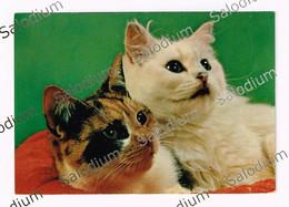 GATTO CAT - Cats