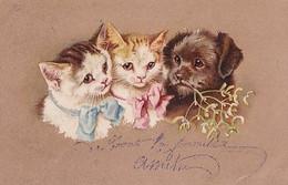 CHATS AU RUBAN + CHIEN - Cats