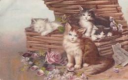 3 CHATS  DANS UNE MALLE - Cats