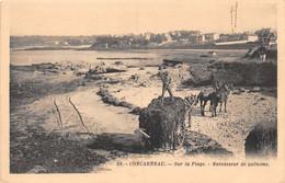 Concarneau Sur La Plage Ramasseur De Goëmons - Concarneau