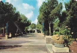 (M452) - VITTORIA (Ragusa) - Uno Scorcio Della Villa Comunale - Ragusa
