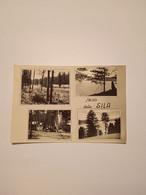 ITALIA-CALABRIA-SALUTI DALLA SILA -QUATTRO VEDUTE-FG-1954 - Sin Clasificación