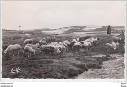 PLATEAU DES MILLES VACHES MOUTONS AU PATURAGE CPSM 9X14 1955 TBE - Other Municipalities