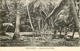 ILES GILBERT - Intérieur De La Foret - Kiribati