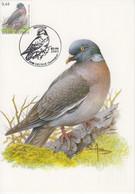 Buzin Houtduif - Pigeon Ramier 02-04-2005  OCB 3390 - 2001-2010