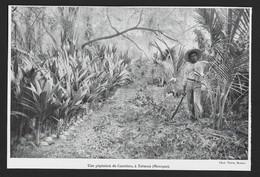 1922  --  MEXIQUE UNE PEPINIERE DE COCOTIERS A TABASCO . 3T981 - Unclassified