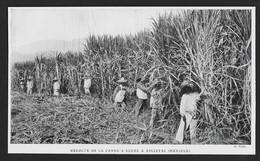 1922  --  MEXIQUE . RECOLTE DE LA CANNE A SUCRE A ASLIXTAC . 3T986 - Unclassified